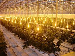 Расчет освещенности для растений в теплицу