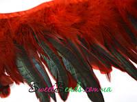 Перья петуха, красный