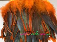 Перья петуха, оранж