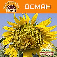 Семена подсолнечника Осман (115 – 118 дн., гранстар)