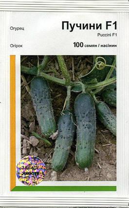 Семена огурца Пучини F1 / Puccini F1, 100 семян — партенокарпик, ранний, Rijk Zwaan, фото 2