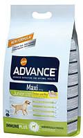 Корм для молодых собак Advance Maxi Junior