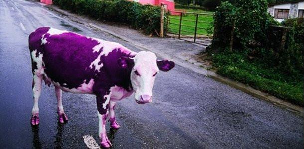 Тепловий насос для охолодження молока - ЕФЕКТИВНІ ТЕПЛОВІ НАСОСИ в Львове