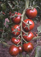 Семена томата Тайгер F1 100 семян Yuksel seeds