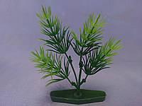 """Растение серии """"К"""" № 3 - 10см"""