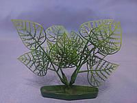 """Растение серии """"К"""" № 4 - 10см"""