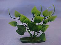 """Растение серии """"К"""" № 5 - 10см"""