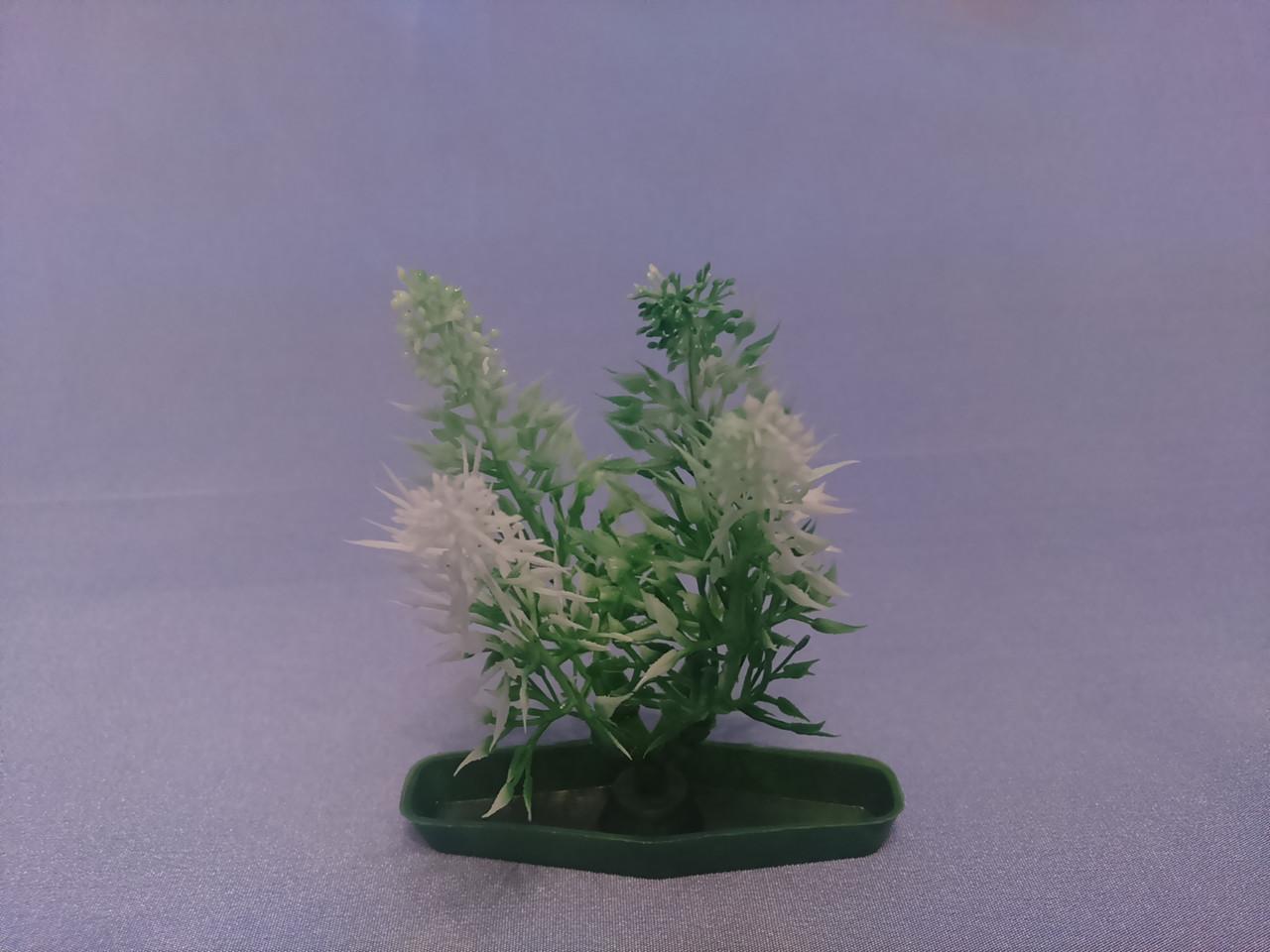 """Растение серии """"К"""" № 7 - 10см"""