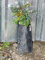 1.Растения – почтой