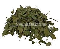 Листья ЮЮба из Египта (лист кустарника Зизифус, унаби, китайского финика))