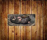 Средства от медведки и крота