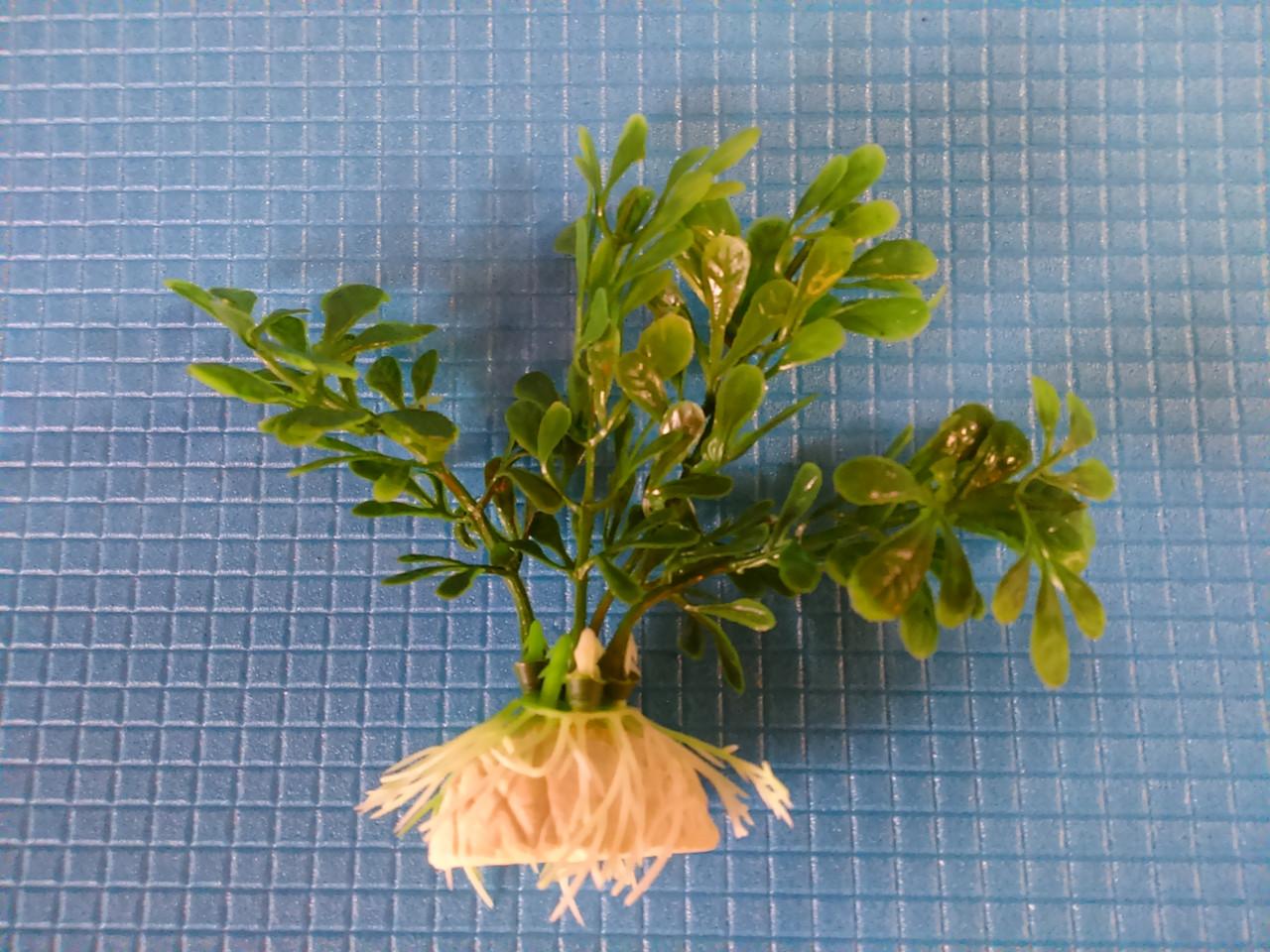 """Растение серии """"Е"""" № 49 - 10см"""
