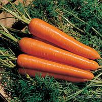 """Морковь """"Нантес Скарлет"""""""