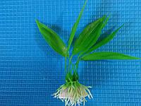 """Растение серии """"Е"""" 51 - 10см"""