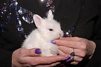 Декоративные миники крольчата короткоухие до 1 кг