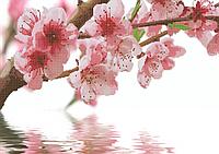 Схема для вышивки бисером Ветка сакуры в отражении