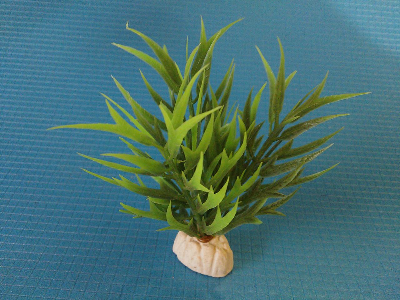 """Растение серии """"Sunny"""" AP-115С, 10см"""