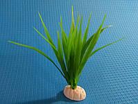 """Растение серии """"AP"""" 041С - 10см"""