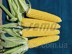 Семена кукурузы Алойзия F1 / ALOJZIA F1  500 грамм Semo
