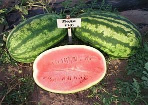 Семена арбуза Леди F1 (Nunhems/ АГРОПАК+) 100 сем — ранний (65 дн), удлиненной формы, СЛАДКИЙ! вес 9-12 кг, фото 2