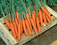 Семена моркови Престо F1 Hazera 25 000 шт