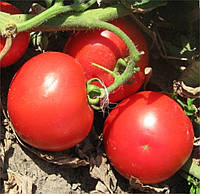 Семена томата Волна F1, 1000 шт, Hazera