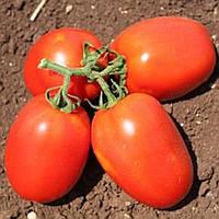 Семена томата детерминантного Галилея F1 Hazera 1 000 шт