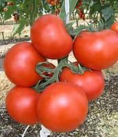Семена томата детерминантного Катя F1 Hazera 1 000 шт