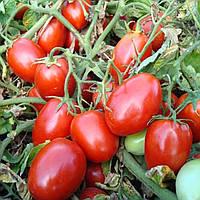 Семена томата детерминантного Таша F1 Hazera 1 000 шт