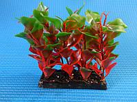 """Растение серии """"Sunny"""" Н- 015A, 10см"""