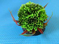 """Растение серии """"Sunny"""" Q- 109C, 10см"""