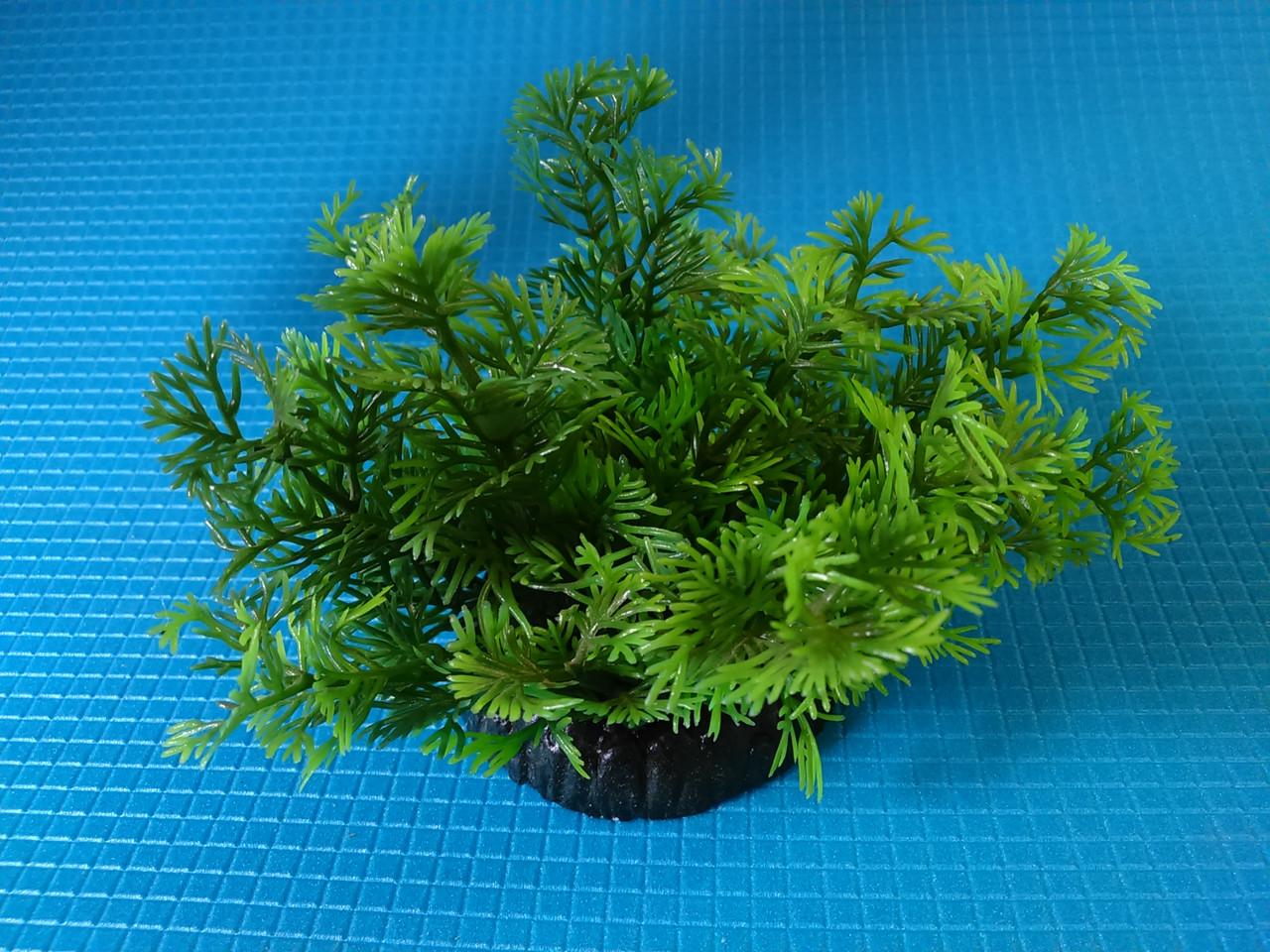 """Растение   серии """"Sunny""""  Q- 075C, 10см"""