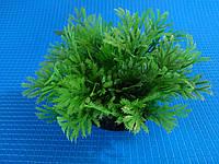 """Растение серии """"Sunny"""" Q- 082C - 10см"""