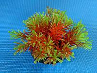 """Растение серии """"Sunny"""" Q -110D1, 10см"""