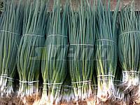 Семена лука на перо Кай (Kaj) 500 грамм Semo