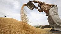 Украинские аграрии побили рекорд по продаже пшеницы в Индию, Таиланд и Индонезию