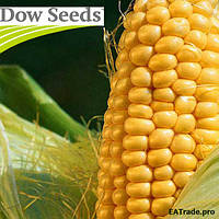 Семена кукурузы МТ Матадо (MT Matado) от Dow Seeds (Дау Сидс)