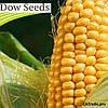 Семена кукурузы ДС 0706С (DS 0706С) от Dow Seeds (Дау Сидс)