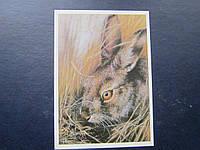 Открытка СССР 1989 дя картмаксимума охрана природы заяц русак