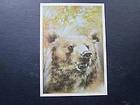 Открытка для картмаксимума СССР 1989 охрана природы медведь