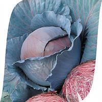 Семена капусты краснокачанной Рэд Династи F1 (Red Dynasty). Упаковка 2500 семян