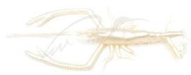 "Силикон Vagabond V-Alive Crust Bug 4.5"" col.16 perl white glow"
