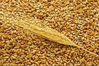 Украинским аграриям разрешили смешивать разные классы зерна