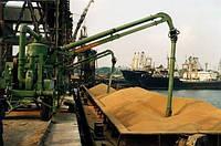 Пятая часть экспортного зерна может остаться в Украине