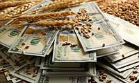 Куда уходит украинская пшеница?