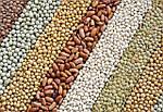 Почему закупать зерно нужно в нашем интернет-магазине?