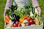 Как получать хороший урожай озимых культур при любых условиях?