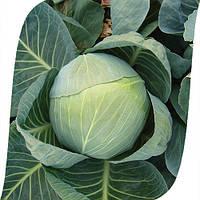 Семена капусты Колия F1 (Kolia). Упаковка 2500 семян