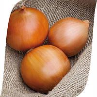Семена лука Замбези F1 (Zambezi F1). Упаковка 250 000 семян.