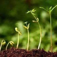 Стимуляторы роста растений широкого спектра